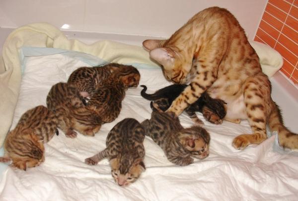 filhotes gatos recém nascido