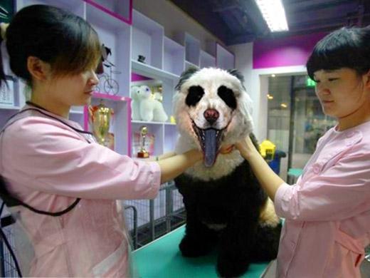 Pintando o cachorro de Panda