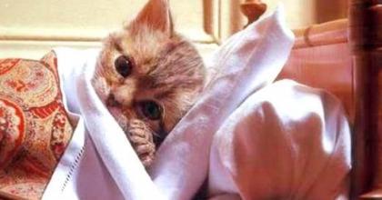 Doenças de gatos: Conheças as principais e como evitá-las
