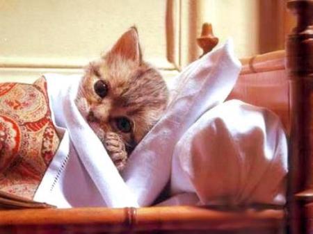 Doenças de gatos