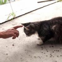 Saiba o que fazer em casos de gatos xenofóbicos ou antissociais e como deixar os gatos mais tranquilos