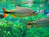 Imagem do Pantanal e o Refúgio Ecológico Caiman