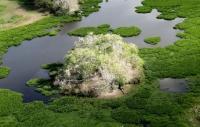 Pantanal e o Refúgio Ecológico Caiman - Brasil