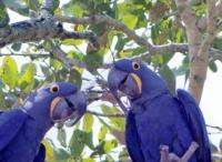 Fotos do Pantanal - Brasil