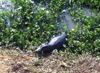 Foto do Pantanal e o Refúgio Ecológico Caiman