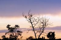 Fotos do Pantanal e o Refúgio Ecológico Caiman