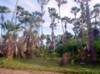 Imagens do Pantanal - Brasil