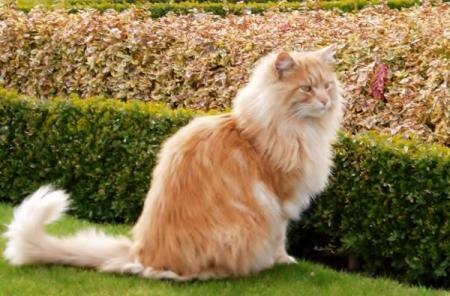 Foto de gatos