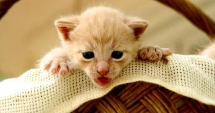 Os gatos precisam se sentir seguros no ambiente e é você que o ajudará nesse momento
