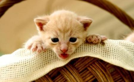 Fotos de filhotes de gatos